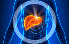Liver Location In The Body